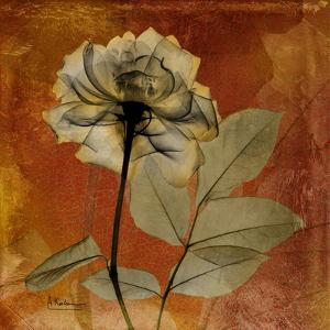 Rose by Albert Koetsier