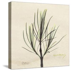 Rosemary on Beige by Albert Koetsier