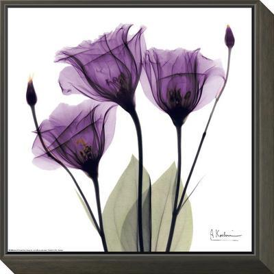 Royal Purple Gentian Trio by Albert Koetsier