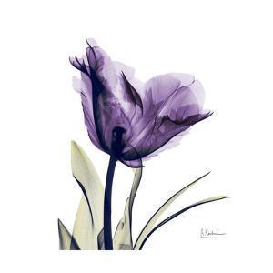 Royal Purple Parrot Tulip by Albert Koetsier