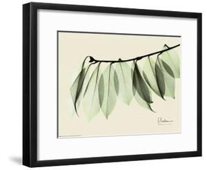 Sage Eucalyptus Leaves I by Albert Koetsier