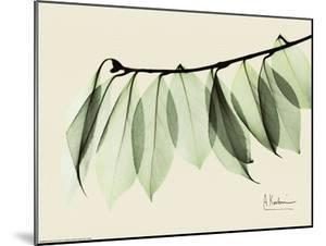 Sage Eucalyptus Leaves I by Albert Koetsier