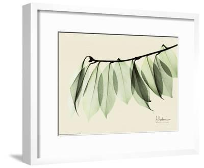 Sage Eucalyptus Leaves I
