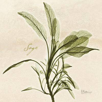 Sage in Bloom