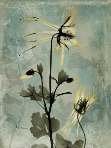 Sage Opus Columbine by Albert Koetsier