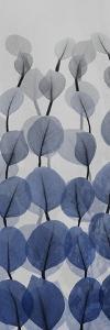 Sapphire Blooms 3 by Albert Koetsier