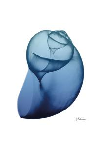 Scenic Water Snail 1 by Albert Koetsier