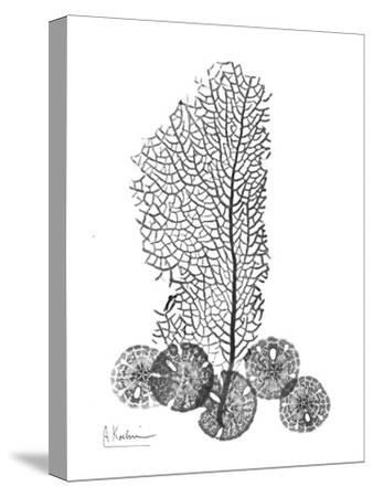 Sea Fan and Sand Dollar in Black and White