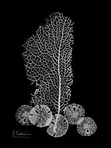 Sea Fan and Sand Dollar on Black by Albert Koetsier