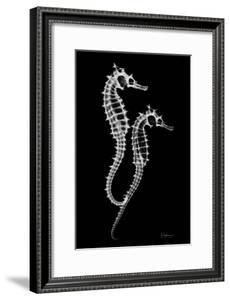 Sea Horse Xray by Albert Koetsier
