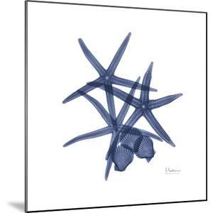 Sea Life in Blue by Albert Koetsier