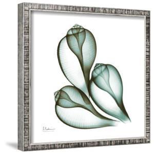 Sea Shells in Green II by Albert Koetsier