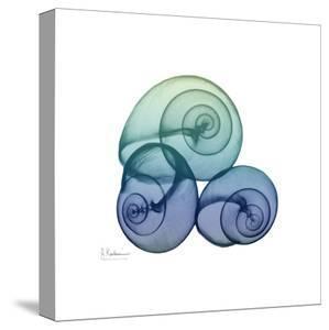 Sea Sky Snails by Albert Koetsier