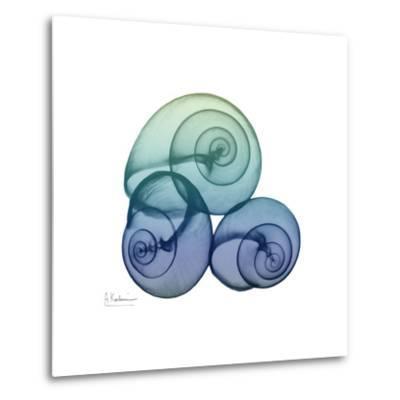 Sea Sky Snails
