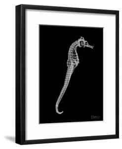 Seahorse In The Black by Albert Koetsier