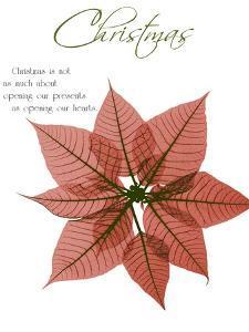 Seasonal Poinsettia 1 by Albert Koetsier