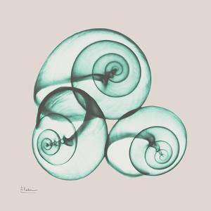 Shamrock Sky Snails by Albert Koetsier