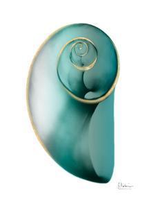 Shimmering Snail 2 by Albert Koetsier