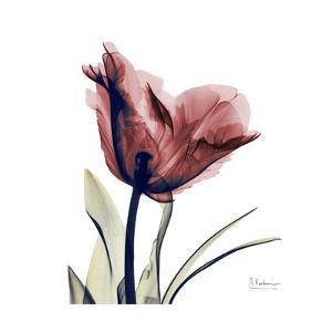 Single Tulip in Red by Albert Koetsier
