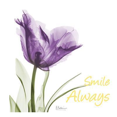 Smile Always Tulip
