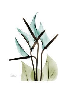 Soft Anthurium by Albert Koetsier