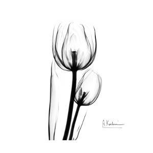 Soft Gray Tulips by Albert Koetsier