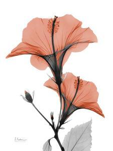 Soft Hibiscus by Albert Koetsier