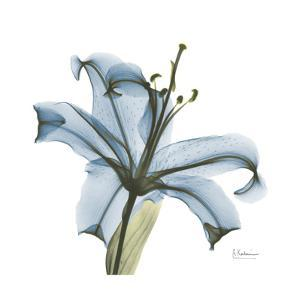Soft Lily by Albert Koetsier