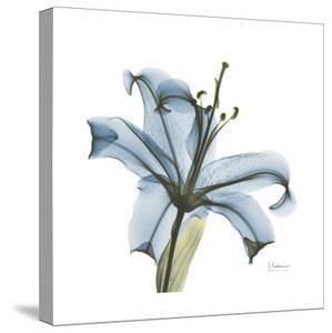 Soft Lily by Albert Koetsier