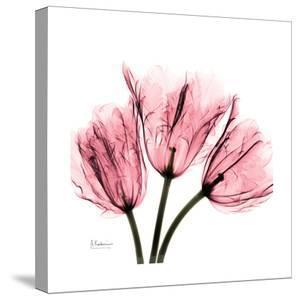 Soft Pink Tulips by Albert Koetsier