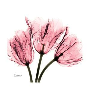 Soft Pink Tulips by Albert Koetsier