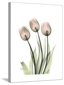 Soft Tulip Portrait 2 by Albert Koetsier