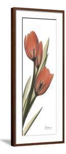 Soft Tulip by Albert Koetsier