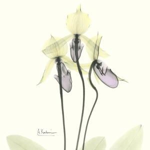 Soft Yellow Orchids by Albert Koetsier