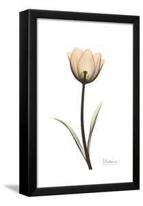 Solo Tulip Portrait by Albert Koetsier