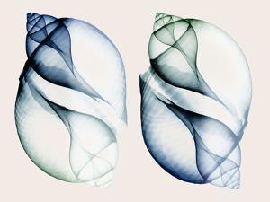 Split Breeze 1 by Albert Koetsier