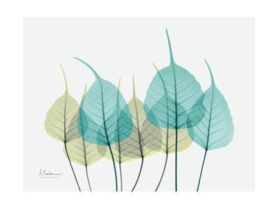 Spring Bodhi Leaves