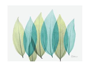 Spring Coculus Leaves by Albert Koetsier