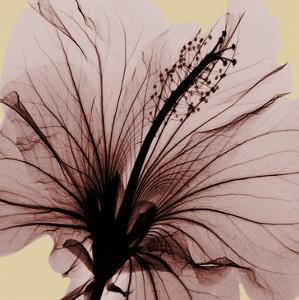 Spring Hibiscus by Albert Koetsier