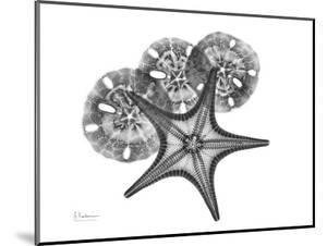 Starfish and Sand Dollar by Albert Koetsier