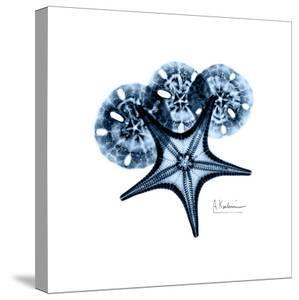 Starfish in Blue by Albert Koetsier