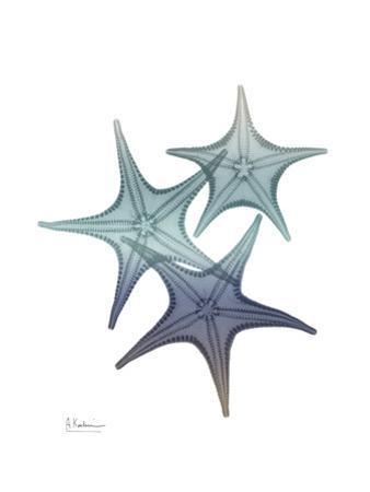 Starfish Ombre 2 by Albert Koetsier
