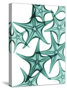 Starfish by Albert Koetsier
