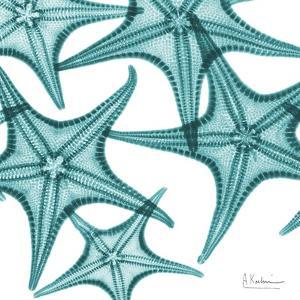 Starfishes by Albert Koetsier