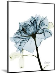 Steal Rose 2 by Albert Koetsier
