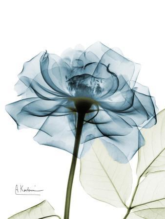 Steal Rose by Albert Koetsier