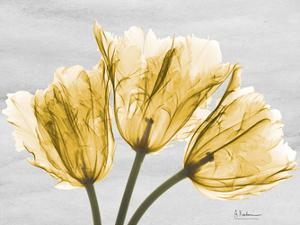 Sunny Trio Tulips by Albert Koetsier