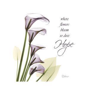 Swaying Callas, Hope by Albert Koetsier