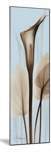 Tall Brown Calla Lily by Albert Koetsier