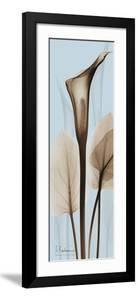 Tall Brown Calla Lily by Albert Koetsier